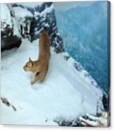 Bobcat On A Mountain Ledge Canvas Print