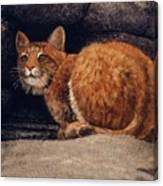 Bobcat On Ledge Canvas Print