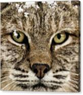 Bobcat Whiskers Canvas Print