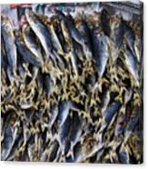 Bodboron Filipino Dried Fish Canvas Print