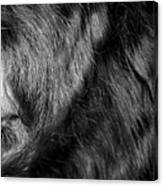 Body Of Hair Canvas Print