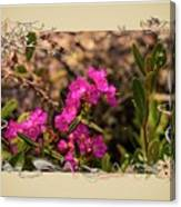 Bog Laurel Flowers Canvas Print