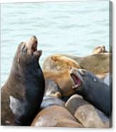 Boisterous Pinnipeds Canvas Print