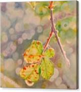 Bokeh - Sunlight On Brambles And Cobwebs Canvas Print