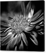 Bold Black And White Flower Canvas Print