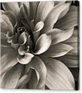 Bold Bloom Canvas Print