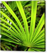 Bold Fronds 0 Canvas Print