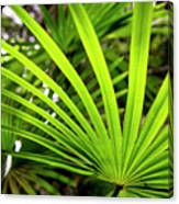 Bold Fronds 1 Canvas Print