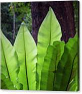 Bold Fronds 11 Canvas Print