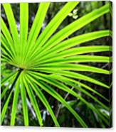 Bold Fronds 3 Canvas Print