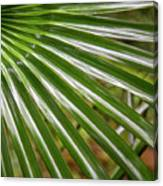 Bold Fronds 4 Canvas Print