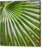 Bold Fronds 5 Canvas Print