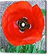 Bold Poppy Canvas Print