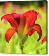 Bold Red Gold - Daylily Canvas Print