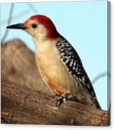 Bold Woodpecker Canvas Print