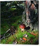 Boletus Mushroom Canvas Print