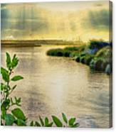 Bolsa Chica Bird Sanctuary Canvas Print