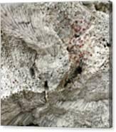 Bonaire Coral And Shells 1 Canvas Print