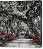 Bonaventure Cemetery Bw Canvas Print