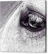 Bonbon's Eye Canvas Print
