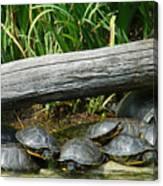 Bonding Box Turtles Canvas Print