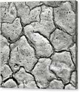 Bone Dry  Canvas Print