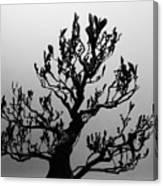 Bonsai Black And White Canvas Print