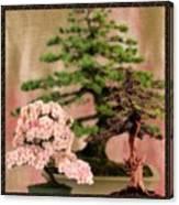 Bonsai Garden Canvas Print