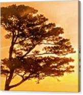 Bonsai Pine Sunrise Canvas Print