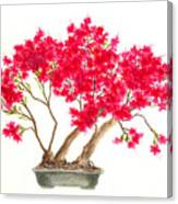 Bonsai Tree - Kurume Azalea Canvas Print