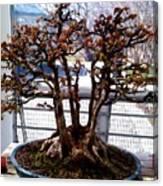 Bonsia Tree Garden Canvas Print