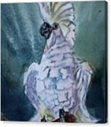 Boo The Umbrella Cockatoo Canvas Print