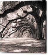 Boone Hall Plantation Live Oaks Canvas Print
