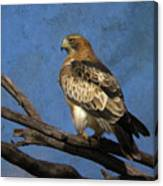 Booted Eagle Canvas Print