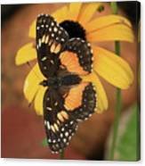 Bordered Patch Canvas Print