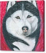 Boris The Siberian Husky Canvas Print