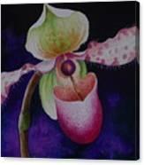 Borneo Orchid P Chiquita Canvas Print
