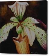 Borneo Orchid P Lebaudyanum Canvas Print