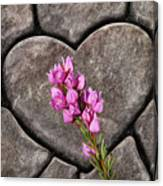 Boronia Love Canvas Print