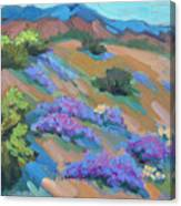Borrego Springs Verbena Canvas Print