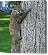 Boston Common Squirrel Hanging From A Tree Boston Ma Canvas Print