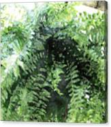 Boston Fern With Visitor Canvas Print