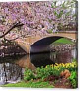 Boston Ma Spring Tree On The Charles River Esplanade Boston Ma Canvas Print