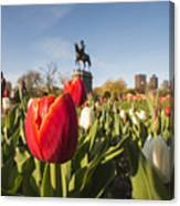 Boston Public Garden Tulips And George Washington Statue Canvas Print