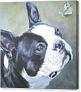 boston Terrier butterfly Canvas Print