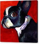 Boston Terrier Dog Portrait 2 Canvas Print