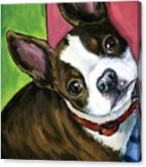 Boston Terrier Looking Up Canvas Print