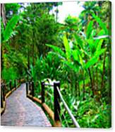 Botanic Gardens Trail Canvas Print