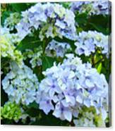 Botanical Art Prints Floral Hydrangea Flower Garden Baslee Canvas Print