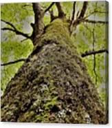 Botanical Behemoth Canvas Print